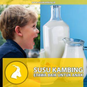 Susu Kambing Etawa untuk Anak
