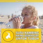 Susu Kambing Naima Berkhasiat untuk Tubuh