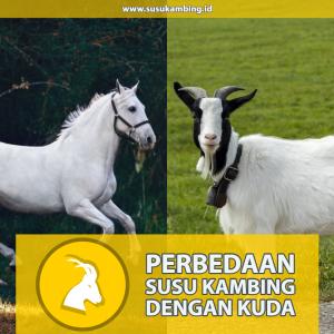 Perbedaan Susu Kambing dengan Kuda