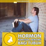Hormon Kortisol, Penting Bagi Tubuh