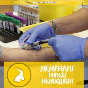 memahami fungsi hemoglobin