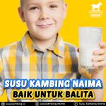 Susu Kambing Untuk Anak Balita Manfaatnya Tidak Kalah dengan Susu Sapi