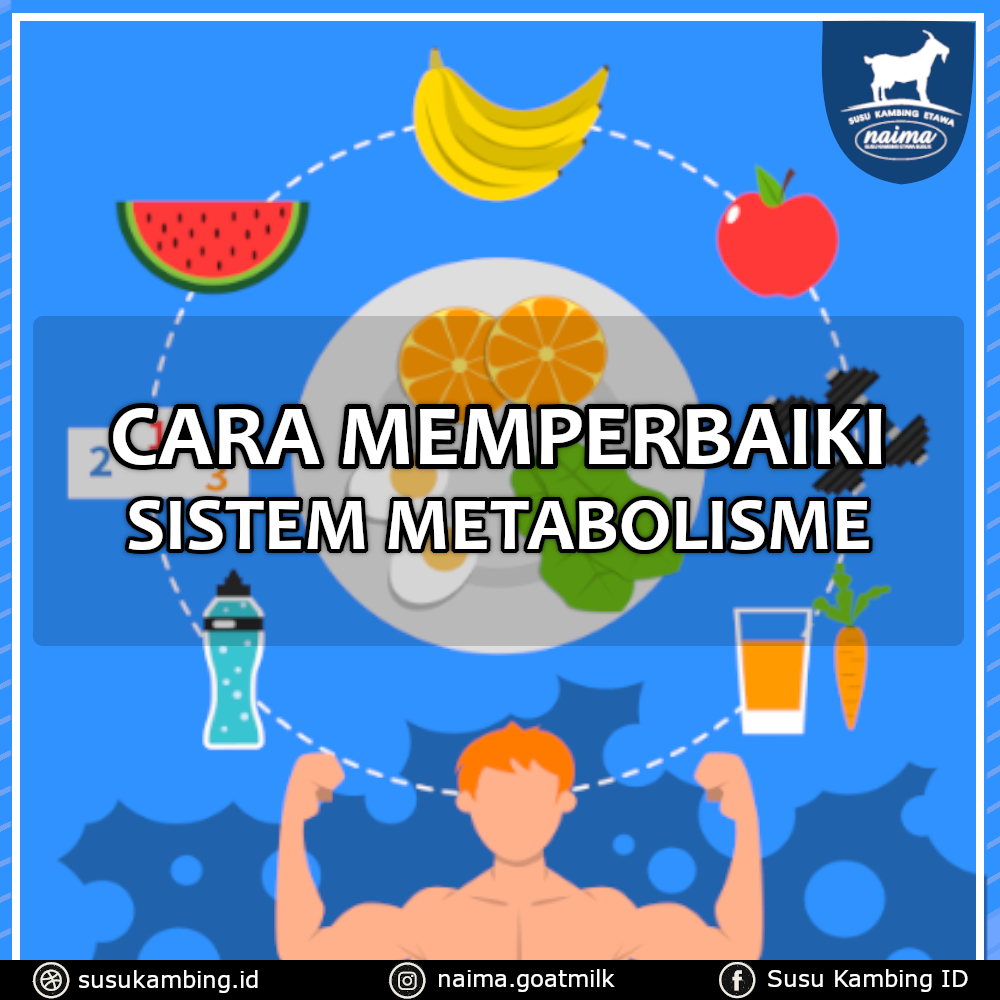 Cara Memperbaiki Sistem Metabolisme - susukambing.id