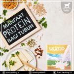 Manfaat Protein Bagi Tubuh Yang Perlu Anda Ketahui